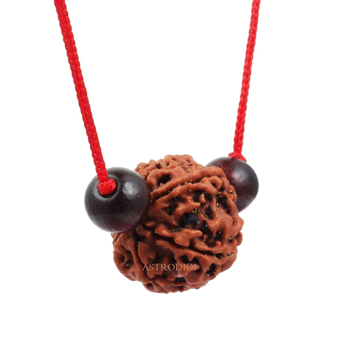 Astrodidi 7 Mukhi Rudraksha Nepali with Red Chandan Beads