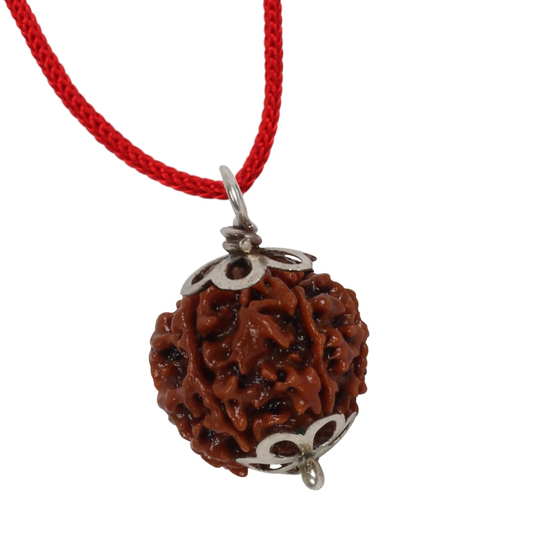 Astrodidi 6 Mukhi Rudraksha Nepali with Lab Report